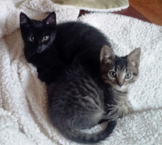 Mochi (black) and Wasabi (tabby)